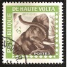 ELEPHANTS - 100 TIMBRES DIFFERENTS