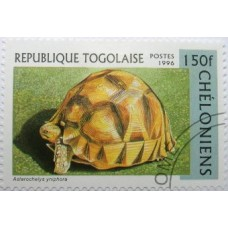 TORTUES - 50 TIMBRES DIFFERENTS